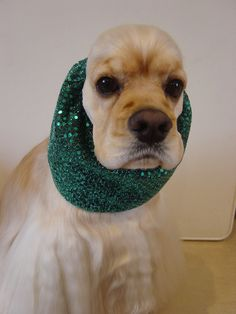 Snazzy Snoods - Kats K9 Mobile Dog Grooming. No more dripping ears!