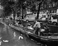 1960's. A worker of the municipal sanitation service (SR) of Amsterdam pulls garbage from the canal into the a barge. Photo Cor Jaring. #amsterdam #1960 #Stadsreiniging