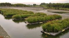 This pic shows how artificial islands are being used to clean up Fish Fry Lake #wetlands #water