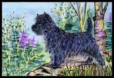 Cairn Terrier Black Indoor / Outdoor Floor MAT 18 X 27 Inches by Caroline's Treasures. $26.99. INDOOR / OUTDOOR FLOOR MAT This is available in either 18 inch by 27 inch Action Back Felt Floor Mat / Carpet / Rug that is Made and Printed in the USA. A Black binding tape is sewn around the mat for durability and to nicely frame the artwork. The mat has been permenantly dyed for moderate traffic and can be placed inside or out (only under a covered space). Durable and...