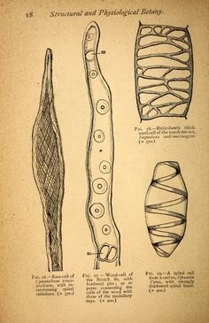 Text-book of structural and physiological botany / - Biodiversity Heritage Library