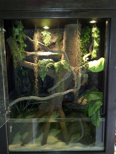 The Green Tree Python pictured here in one of HP Customs GTP Aquarium Enclosures has been seen swimming and drinking from the 200mm high aquarium & running waterfall. Animals are Amazing!!!!