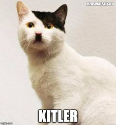 Here to kill all dogs its kitler