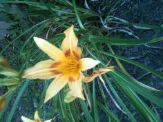 In my garden Garden, Nature, Plants, Garten, Flora, Plant, Lawn And Garden, Outdoor, The Great Outdoors
