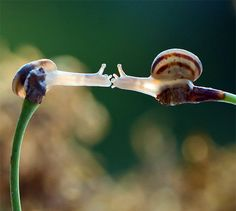 Snail love by Ukrainian photographer Vyacheslav Mishchenko.