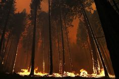 Rim Fire, California Aug/13