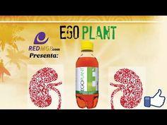 Ego plant Omnilife Diurético Natural cuida Riñones  Vías urinarias  todo el Sistema Renal - http://otrascosasvirales.com/ego-plant-omnilife-diuretico-natural-cuida-rinones-vias-urinarias-todo-el-sistema-renal/