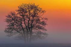 Fotostrecken - Wetter Bilder und Fotos - WetterOnline Bilder des Jahres 2014. Aufnahme von Christoph Weber.