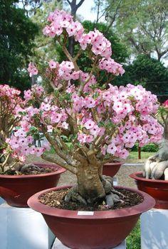 Garden or home decor idea. Great for the backyard!! desert rose tree