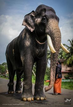 Kerala Elephant Wallpaper Hd Tattooed elephan...