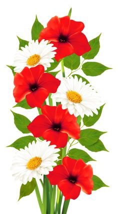 Poppies and Daisies Transparent PNG Clipart