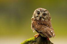 35 Beautiful Owl Photographs - DzineBlog.com