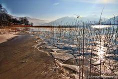 Eiskristalle und Schilf am Tegernsee im Winter