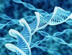 筋肉の成長するシステムを細胞レベルから学ぶ!