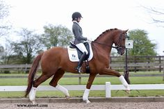 The 5 yr old KWPN stallion Chagall. Wow.