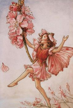Coral Fairy for STINKY