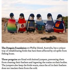 Penguins wearing knitted jumpers.. !!!!!!!