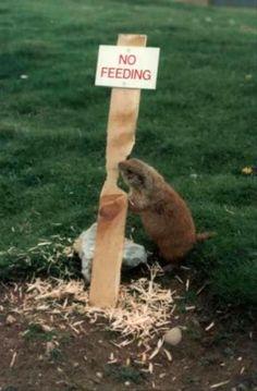 Beaver gives no fkks.