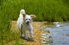 Romp on the Shore. Nora Arden. #dogs