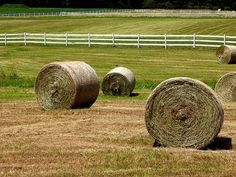 Round bales... many different opinions about them for horses... some problems can include molding, dust, absorption of environmental wetness, and storage