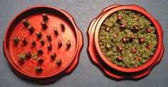 Best Herb Grinders can help ensure you fully enjoy your herbal blends, this quick Herb Grinder Guide will help you figure out what the best Herbal Grinder is Buy Edibles Online, Buy Cannabis Online, Buy Weed Online, Weed Recipes, Grinder, Weed Shop, Cbd Oil For Sale, Smoking Weed, Wood