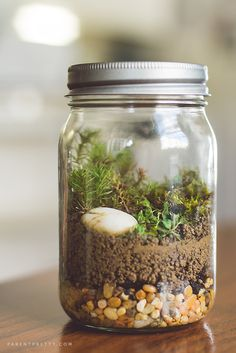 Moss terrarium project for kids - fun and easy! Extra activities while going through Science with Plants. =)