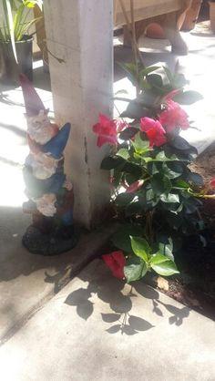 Garden decoration knomes