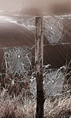 Nature is beautiful: Spider webs All Nature, Amazing Nature, Spider Art, Spider Webs, Foto Macro, Jolie Photo, Natural World, Ciel, Country Life