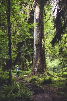 """jonahreenders: """" Hundred year forest. """" By: Jonah Reenders """" """" Lost In The Woods, Walk In The Woods, Enchanted Wood, Fantasy Forest, Old Trees, Belleza Natural, Adventure Is Out There, Go Outside, Mother Earth"""
