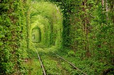 Tunnel of Love, Kleven, Ukraine | Beauty Among The Ruins: See Some of the World's Most Beautiful Abandoned Places