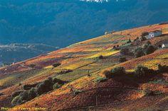 automne en Beaujolais