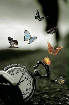 Missing my little butterfly. Time does not make it better. Creative Photography, Amazing Photography, Nature Photography, Fantasy Photography, Butterfly Wallpaper, Butterfly Art, Beautiful Nature Wallpaper, Beautiful Images, Cover Wattpad