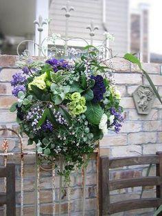 little garden Summer Snow Coconut Dream, Snow In Summer, Outdoor Landscaping, Hanging Baskets, Summer Wreath, Container Gardening, Flower Power, Flower Arrangements, Flora