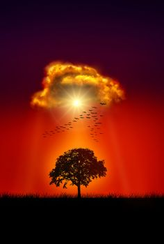 ~~SOLO TREE by Nasser Osman~~