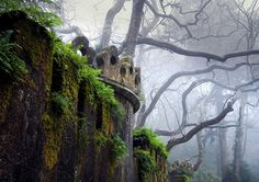 Remains of an abandoned castle in a foggy forest.  So intriguing.  So many questions.  I would not at all be surprised to learn that Fairies live there.