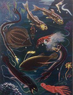 Original 1930s Colour Bookplate Undersea Ocean by Thepapermuseum