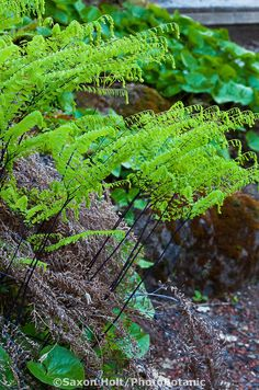 58a0fe4d444839 20 Best water feature plants images