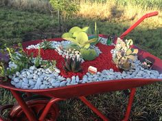 My re-purposed wheelbarrow, painted red, and planted up with succulents, then mulched with red and white pebbles. -Rusty wheelbarrow primed with metal primer (aerosol purchased from Mitre 10) x 1 coat - 3 x coats of bright red, cheap 'fiddly bits' spray paint (2 cans used for good coverage) -filled with premium potting mix -planted with an array of succulents, with flap jack and aloe to add height. -mulched with white washed river pebbles and red gravel. NB* whole in base of wheelbarrow…