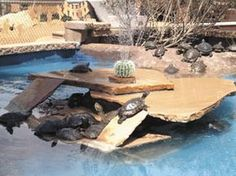 turtle pond with fantastic basking area Tortoise Habitat, Turtle Habitat, Turtle Aquarium, Turtle Pond, Turtle Care, Pet Turtle, Turtle Enclosure, Tortoise Enclosure, Red Eared Slider Turtle