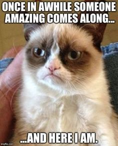 Grumpy cat funny, grumpy cat humor, grumpy cat meme, sarcastic funny, grouchy cat …For more funny quotes and hilarious images visit www.bestfunnyjokes4u.com