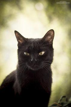 cat by Dmitry Samosudov on 500px