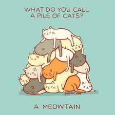 Kitty Cat Hide and Seek Level Creepy ---- hilarious jokes funny pictures walmart fails meme humor wa Corny Jokes, Dad Jokes, Puns Jokes, Funny Cheesy Jokes, Food Puns, Funny Jokes To Tell, Funny Laugh, Crazy Cat Lady, Crazy Cats