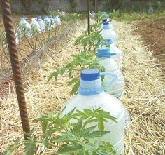 Андрей Туманов: 5 правил полива растений в жару
