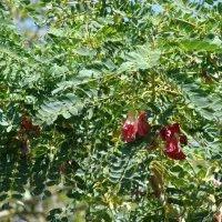 விவசாயம் | Vivasayam பற்றிய கட்டுரைகள் ,தோட்டக்கலை பயிர்கள், ஆடு மாடு வளர்ப்பு Blog Images, Plants, Plant, Planets