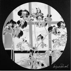 Trademark Fine Art Black Orchids Canvas Art by Miguel Paredes, Size: 24 x 24, Black
