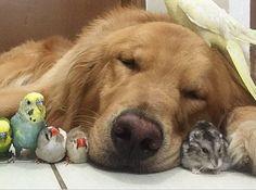 Νikolas: Η καταπληκτική φιλία ανάμεσα σε ένα σκύλο, ένα χάμ...