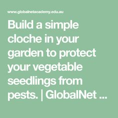 Build a simple cloche in your garden to protect your vegetable seedlings from pests. | GlobalNet Academy