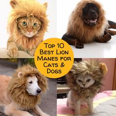 Looking for a lion mane costume for dogs or cats? This list has ten of the best, most affordable options out there (and even a DIY option if you are wondering how to make one yourself)!