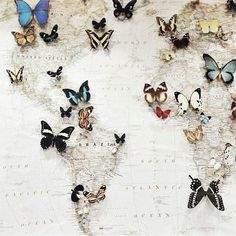 Image via We Heart It https://weheartit.com/entry/147462741 #background #butterflies #earth #map #nature #wallpaper #earthmap