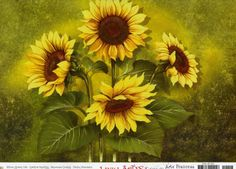 Flores,Flowers,Blomster - Signe Pay - Picasa Web Albums